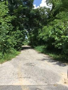 6. Current Olivewood Entrance